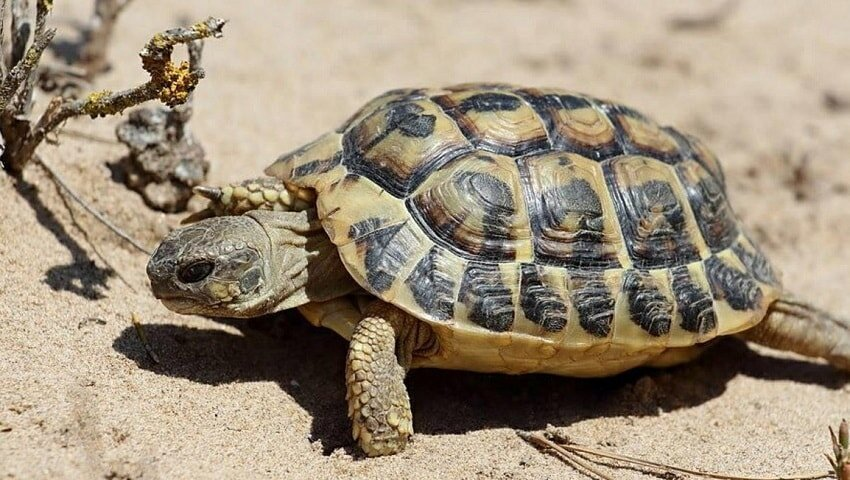 Kaplumbagalarin-Genel-Ozellikleri-9a11.jpg