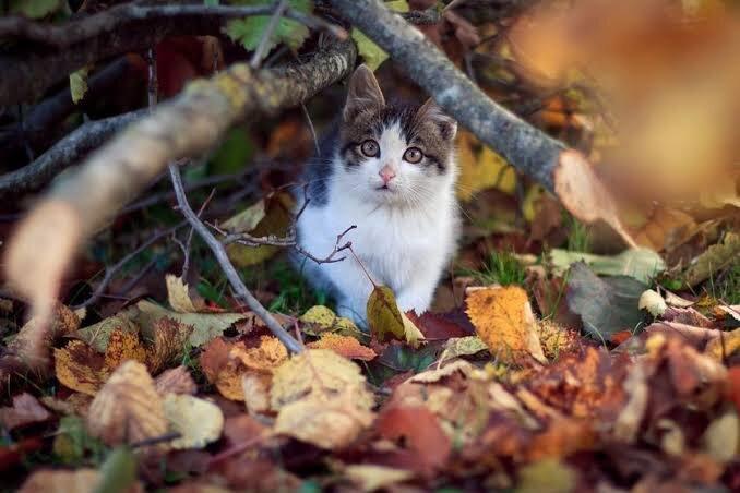 cat-autumn.jpeg