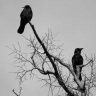 Velvetskin & the Crow