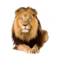 aslanpayi