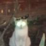 Çalıya Saklanan Kedi